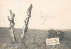Archived image of the Beaumont-Hamel Danger Tree, an iconic Newfoundland landmark from the battle of the Somme